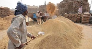 Government of India fixes May 31as the last date for procurement of wheat during Rabi Season 2020-21